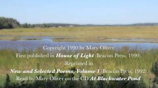 Mary Oliver Quotes Author Of New And Selected Poems Volume One