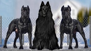 These Are 10 Blackest Dog Breeds Ever