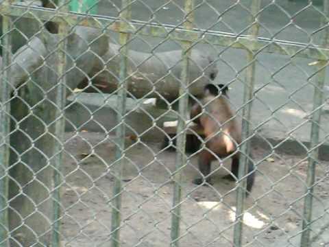 Macaco-GARI