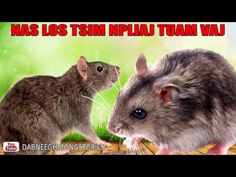DAB NEEG  XWM TXHEEJ  Nas Los Tsim Npliaj Tuam Vaj thumbnail