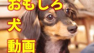 【おもしろ動物ハプニング映像】海外サイトの犬猫もふもふ動画Part5全部...
