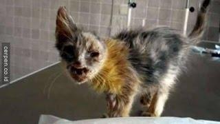 Download Video SEMUA ORANG Jijik Melihat Kucing LIAR Ini, Tapi Setelah Bocah 7 Tahun Ini Muncul KUCING INI BERUBAH MP3 3GP MP4