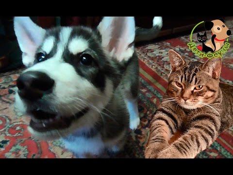 Энтерит у собак. Если щенок погиб от энтерита, когда можно заводить другого?