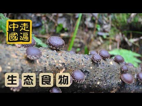 《舌尖上的中国》第三季 宣传片:第六集 酥 | CCTV纪录来源: YouTube · 时长: 1 分钟1 秒