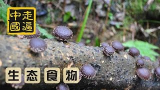 """20141023  走遍中国 八方""""食""""尚(6):天然食材,妙趣横生"""