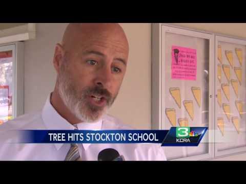 Tree falls on Stockton elementary school