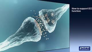 Cannabidiol and the Endocannabinoid System:  A Brief Tutorial
