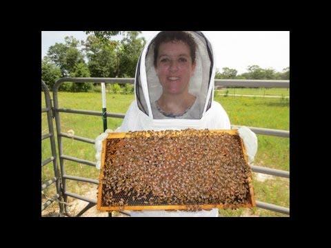 Learn to Be a Great Beekeeper: Beekeeping Mentor Program