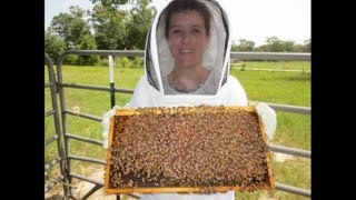 Learn to Be a Great Beekeeper: Beekeeping Mentor Program