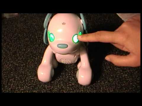 Nintendo DS Wappy Dog Video Game & Toy Review