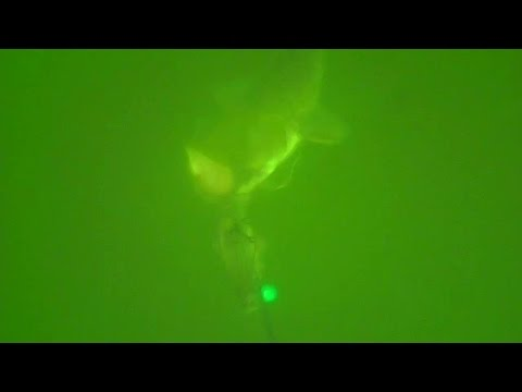 Silures au Fireball vif (Carassin) Dam Madcat Snap-On Vertiball Rig Vertical
