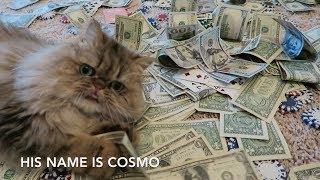 Cosmo The Poker Cat Aims To Shake Up The Poker World Bonuscodepoker