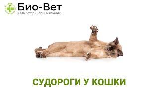Судороги у кошки. Ветеринарная клиника Био-Вет.