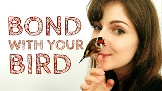 3 Easy Tips for Bonding With Your Bird | Canary & Goldfinch Taming