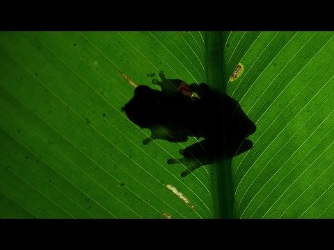 Rainforest night tour @ La Fortuna, Costa Rica
