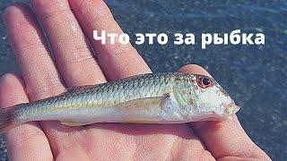 Рыбалка на реке Шапсухо в селе Лермонтово Краснодарского края