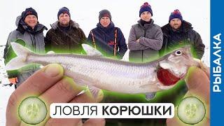 Ловля корюшки зимой лунки снасти огурцы Зимняя рыбалка на Финском заливе