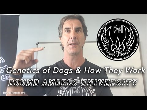 Genetics of Dogs and Understanding Them - Bound Angels University 10/2016