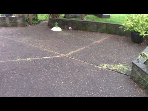 how to clean moss off concrete