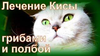 ГАСТРИТ У КОШКИ,  ЛЕЧЕНИЕ: ГРИБ ГЕРИЦИУМ, ПРОРОСШАЯ ПШЕНИЦА, ПИЯВКИ