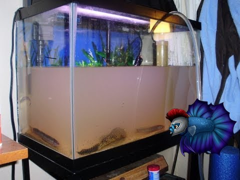 How to fix a smelly fish tank youtube for Stinky fish in a can
