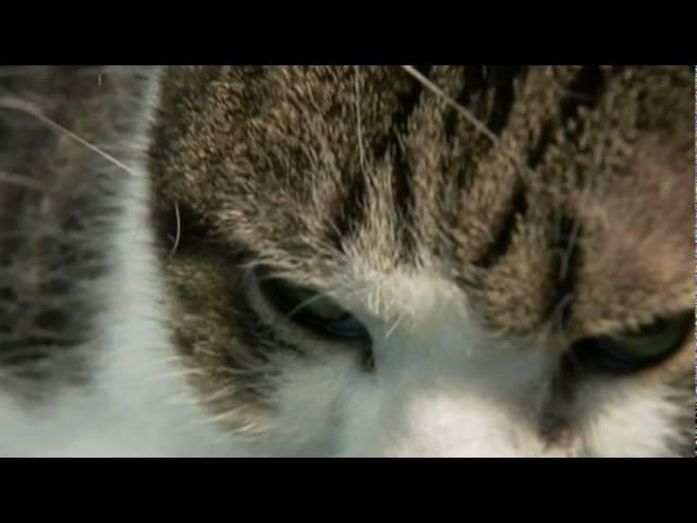 映画『ネコを探して』予告編