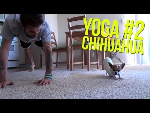 [NEW VIDEO] Yoga Time with Nic and Pancho