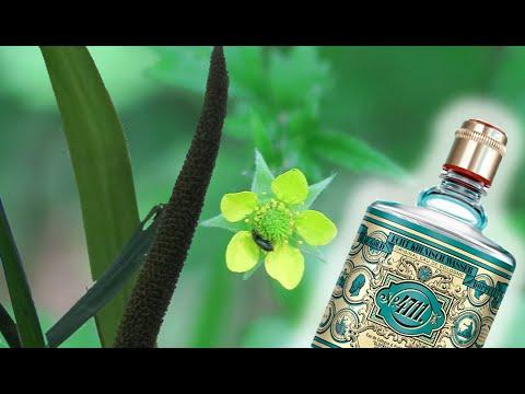 5 natürliche Aromen von Wildpflanzen, von denen Du nicht wusstest, dass es sie bei uns gibt.