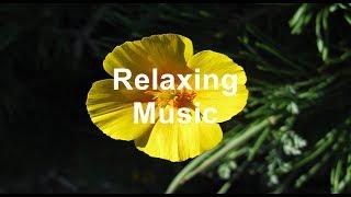Relaxing Music Sleep Study Delta Waves Inner Peace Tai Chi Reiki Yoga Relaxation Meditation Love