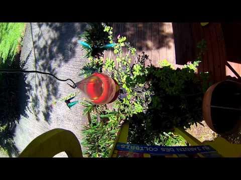 Au jardin des colibris Deshaies Guadeloupe ... Hotel de charme