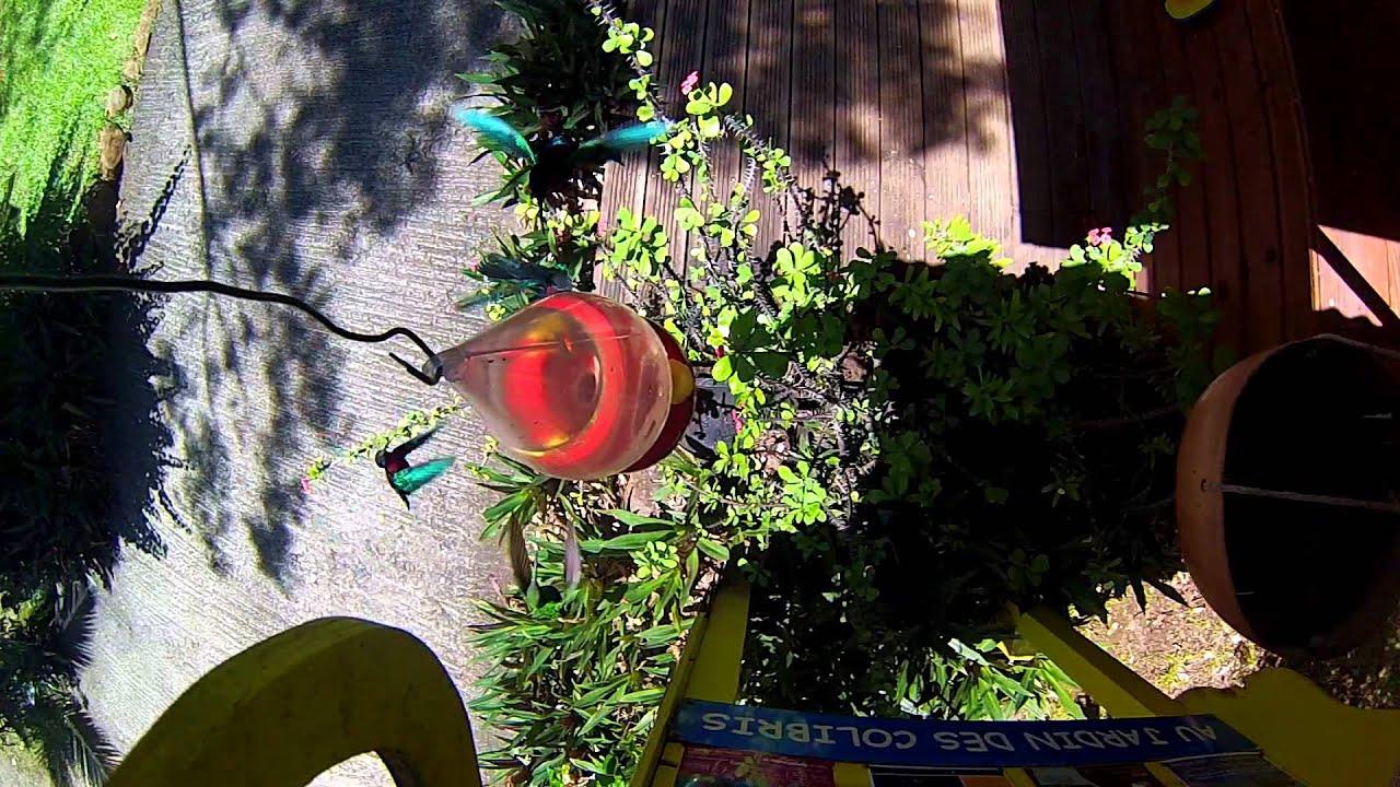 Au jardin des colibris deshaies guadeloupe hotel de for Au jardin des colibris