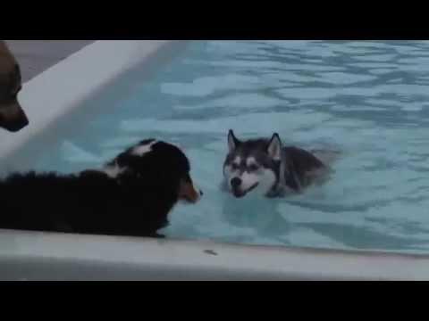 Athens City Dog Swim 2016