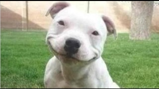 Funny Dogs   A Funny Dog Videos Compilation 2016