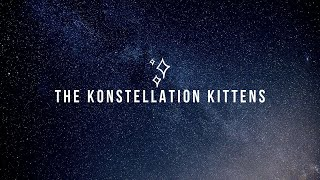 Konstellation Kittens - SOS Pet Rescue - Available for Adoption!