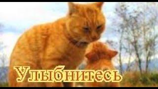 Приколы с котами| Добрый позитив| Видео про котов| Кошки|Животные|Создай себе хорошее настроение