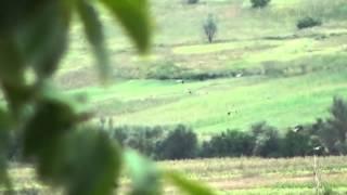Mii de cocori pe câmpie la Călărași