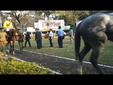 "Paddock parade of ""Kingfisher Ultra Indian  Derby -2017"" horses ."