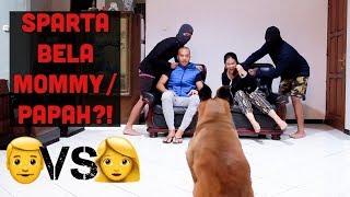 MOMMY DAN PAPAH DISERANG ORANG JAHAT!!