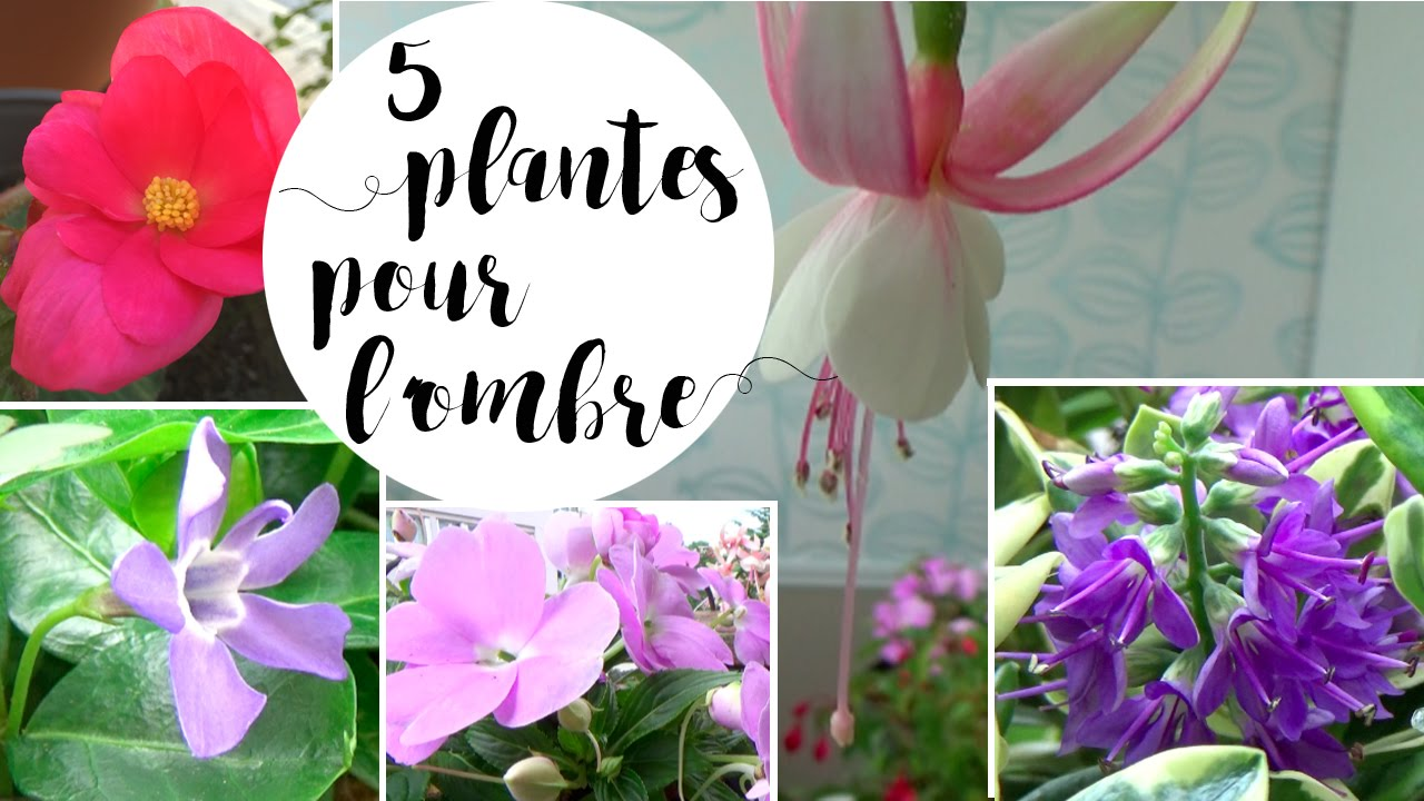 5 plantes pour des fleurs l 39 ombre ou en mi ombre youtube. Black Bedroom Furniture Sets. Home Design Ideas