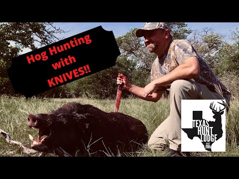 KNIFE Hog Hunt With Dogs At Texas Hunt Lodge!!