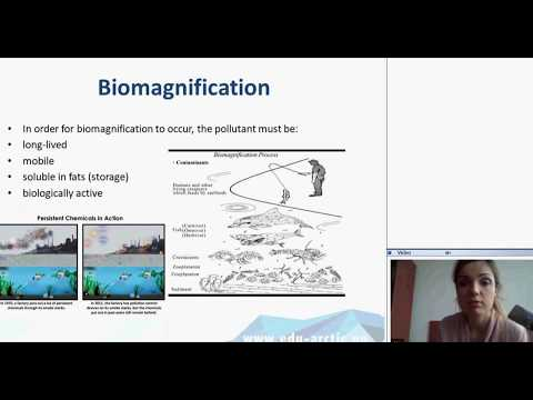When living is toxic: bioaccumulation and biomagnification