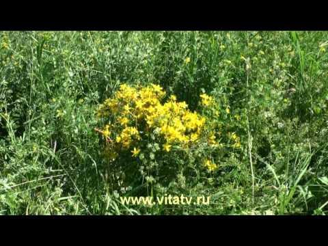 Целебные свойства растений, лекарственные травы. Народная