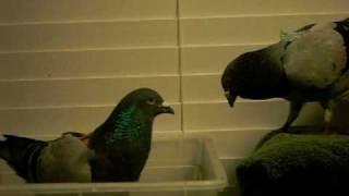 餌場で喧嘩しています。 Fighting over food。