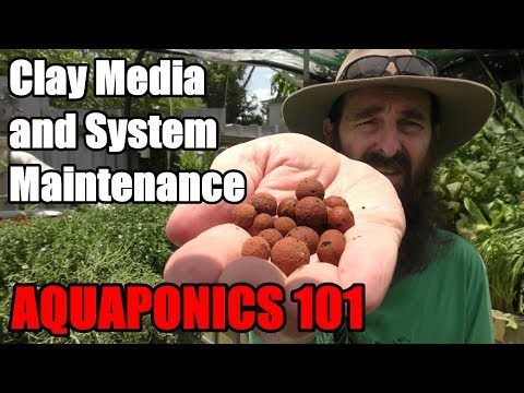 Aquaponic System FAQ | Does it Take a Lot of Work!  How long Does The Pump Run? & MORE