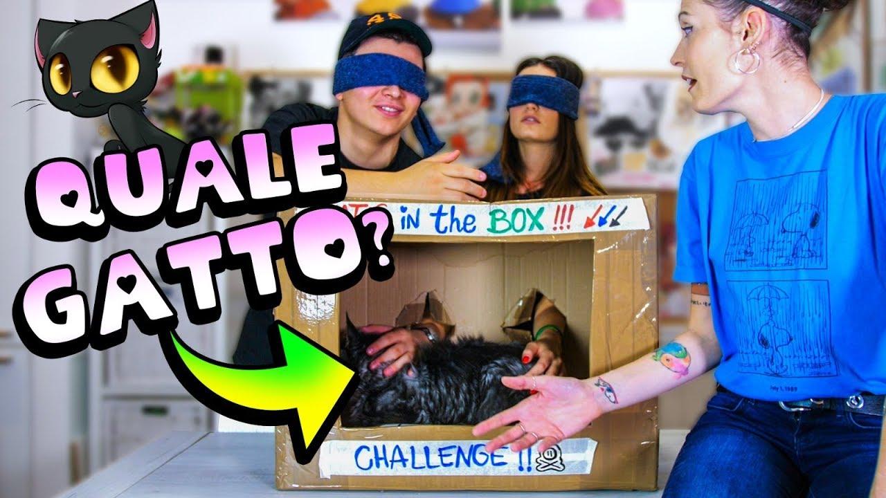 What S Cat In The Box Challenge Quale Gatto è Nella Scatola Youtube