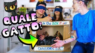 What 's CAT in the BOX Challenge? Quale gatto è nella scatola?