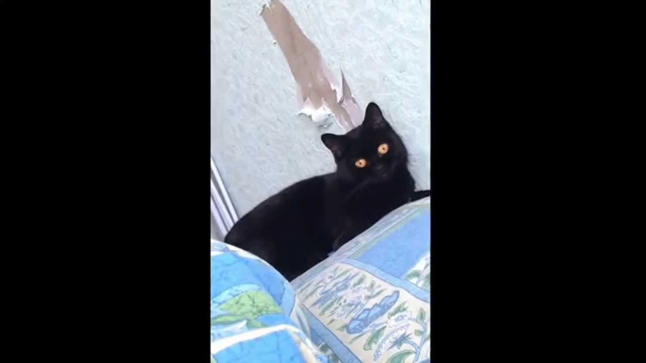 Кот испортил обои