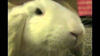 My bunny, Flip Flop