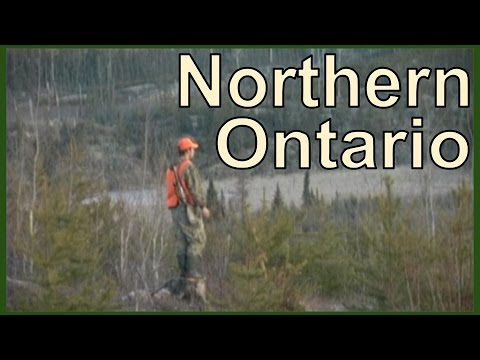 NORTHERN ONTARIO : BIG WOODS BUCKS
