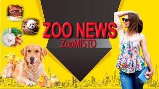 Папа-пес и фотографии еды с мордочками собачек | Новости из мира животных #10 | ZooMisto